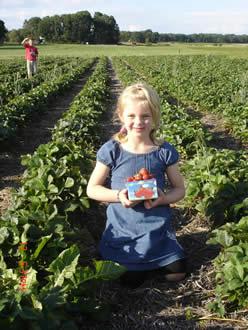 självplockning jordgubbar skåne